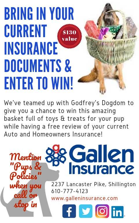 Gallen Art for Arf's Sake Dog Basket Prize Campaign