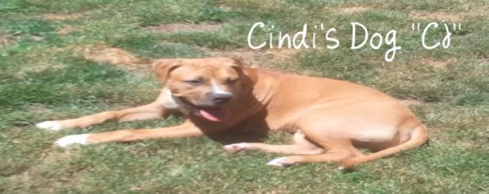 Cindi's Dog