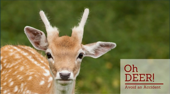 Tips to avoid deer accidents