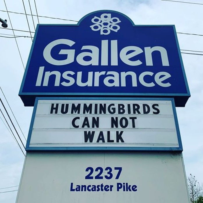 Hummingbirds can not walk - the Gallen Insurance sign on Monday, June 8th, 2020