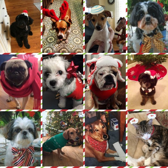 2019 Gallen Insurance Employee Holiday Pet Photos - Purely for your enjoyment, we asked employees to send in a holiday photo of their pet!!