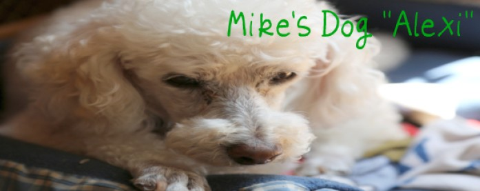 Mike's Dog