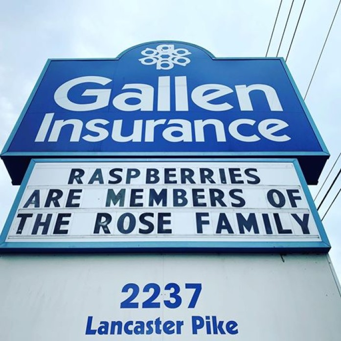 Raspberries are members of the Rose family