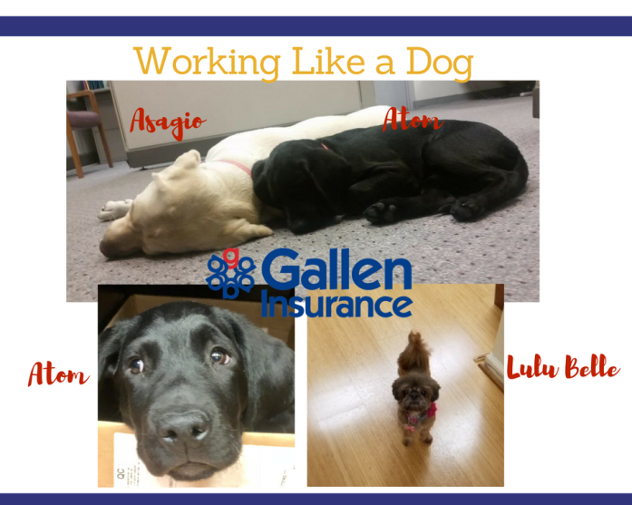 Pet photos - working like a dog at Gallen Insurance