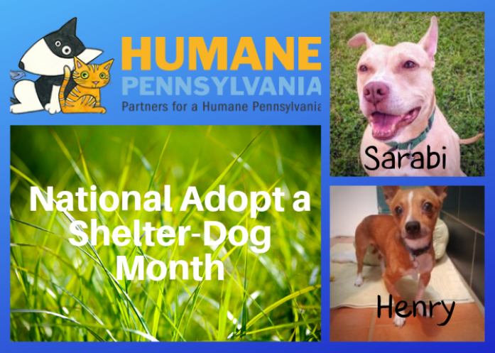 National Adopt a Shelter Dog Month