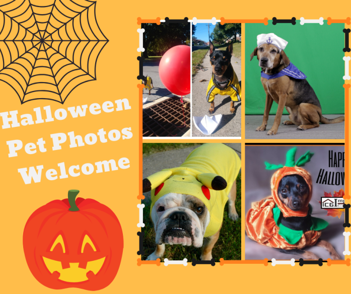 Halloween Pet Photos Welcomed!