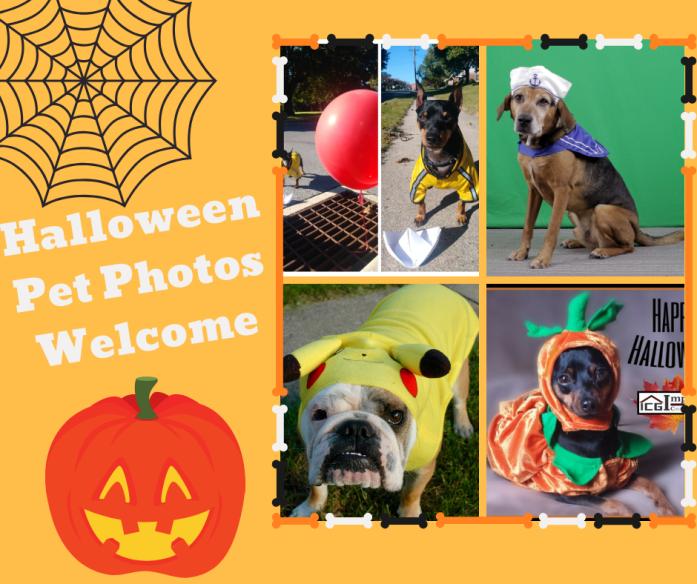 Halloween Pet Photos Welcomed!